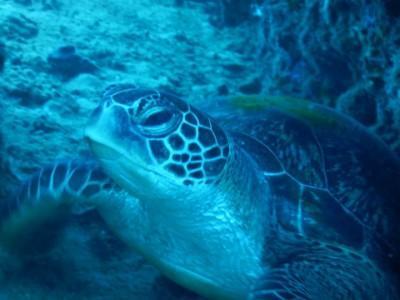 SC_turtle.JPG
