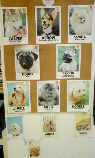 Pups_Pics.jpg