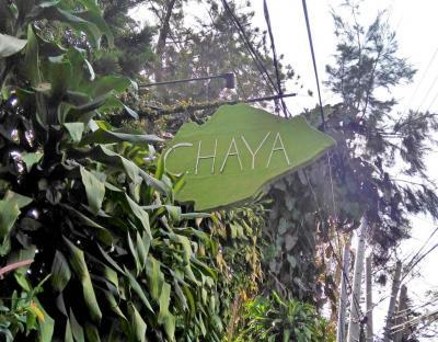 Chaya_Outside.jpg