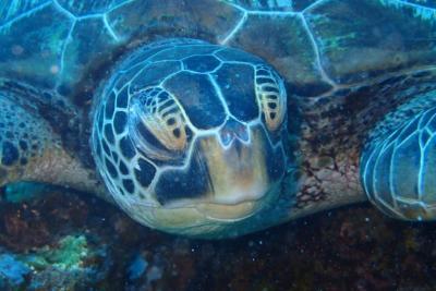 GoodDive_Turtle.JPG